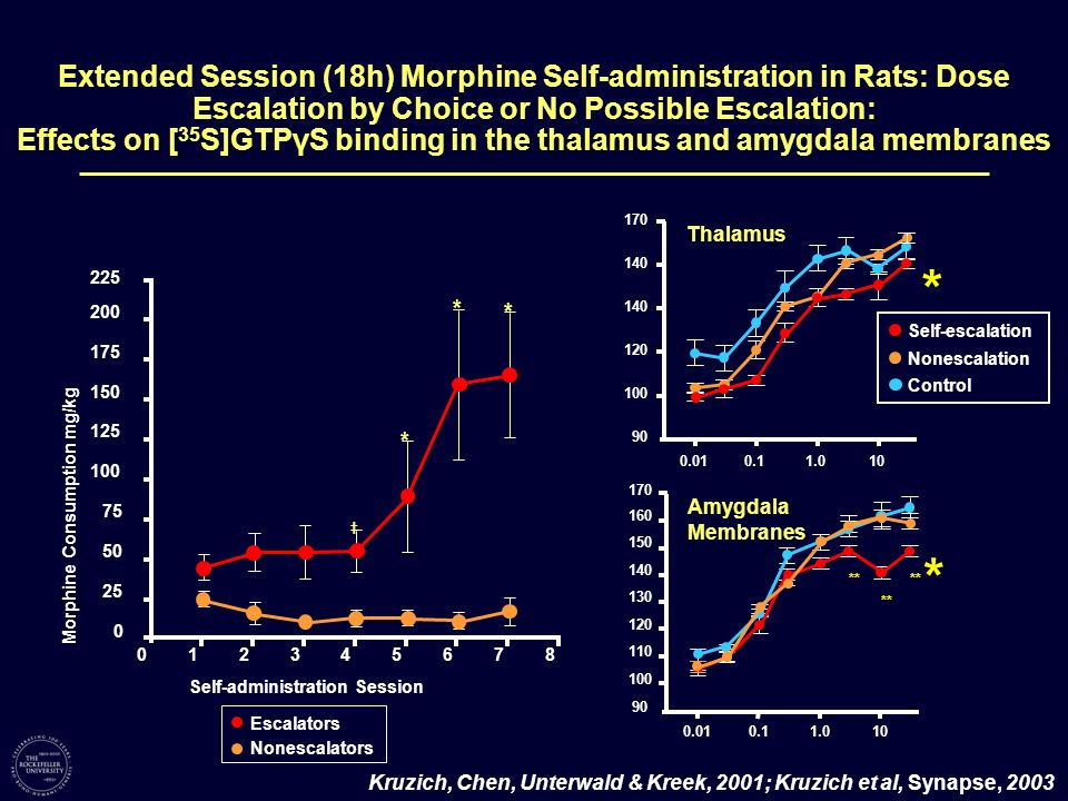 Extended Session (18h) Morphine Self-administration in Rats: Dose Escalation by Choice or No Possible Escalation: Effects on [35S]GTPγS binding in the thalamus and amygdala membranes